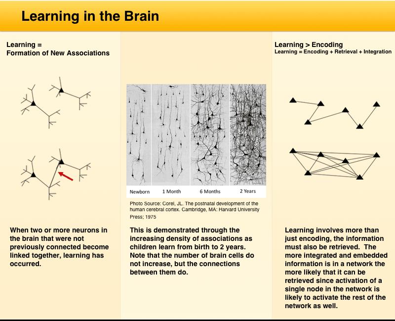 Learning-in-Brain